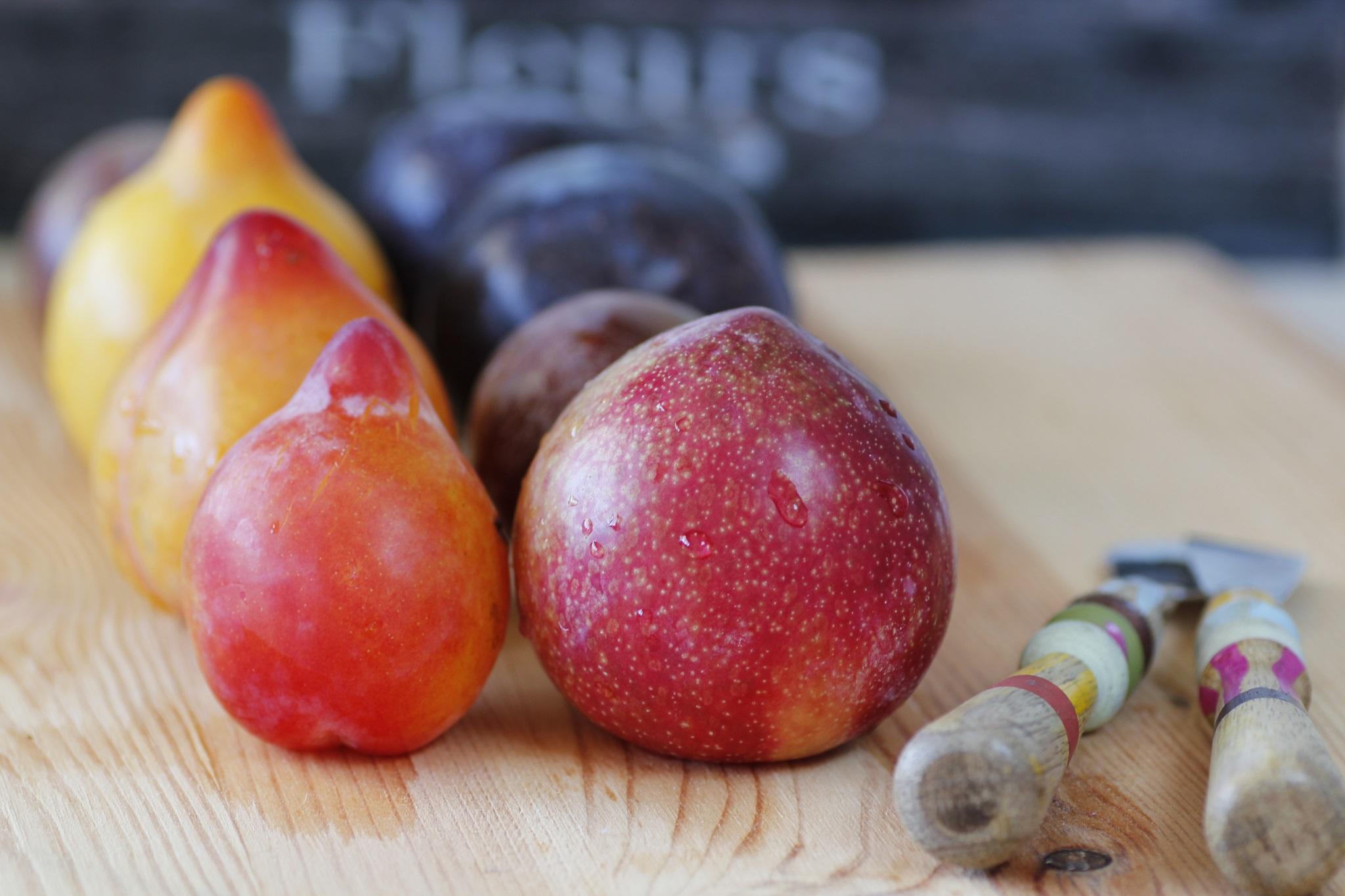 פירות 2